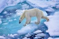 Ученые: Уже через 15 лет Арктика может превратиться в обычный океан